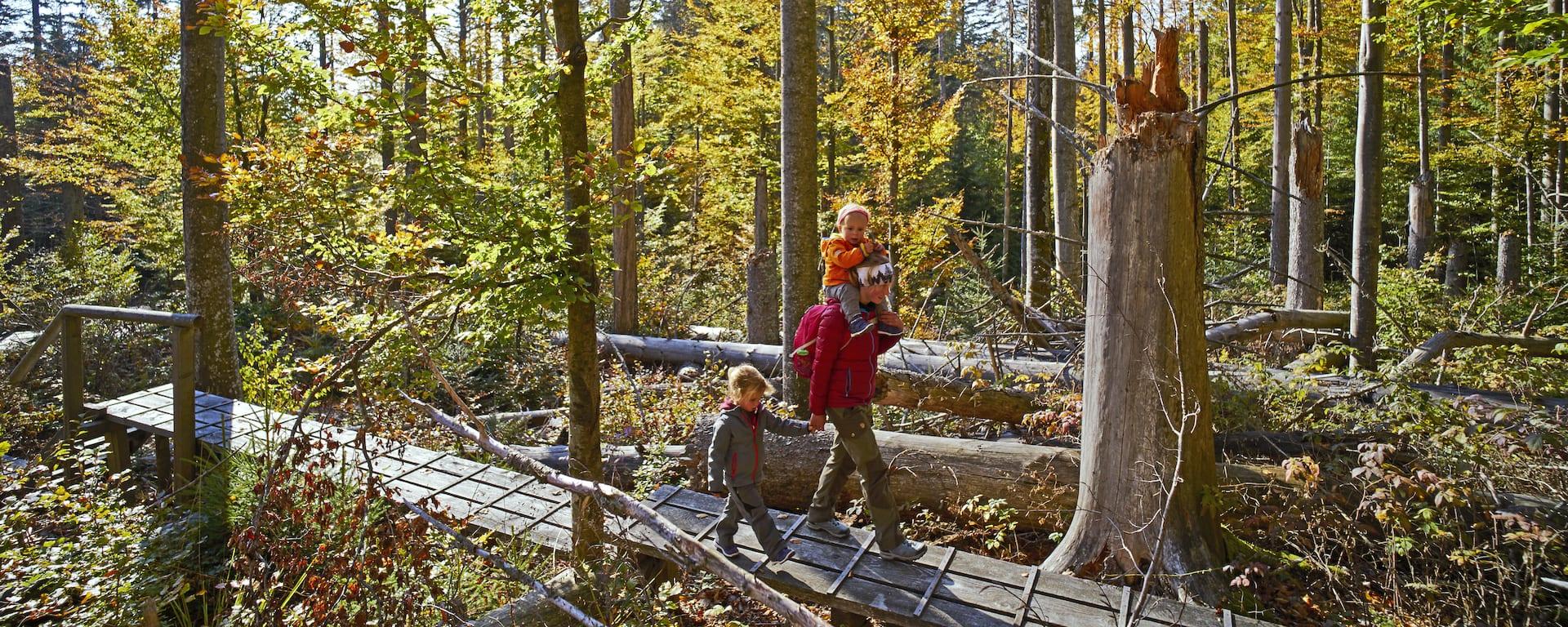 nationalpark bayerischer wald ausflugsziel wandern. Black Bedroom Furniture Sets. Home Design Ideas