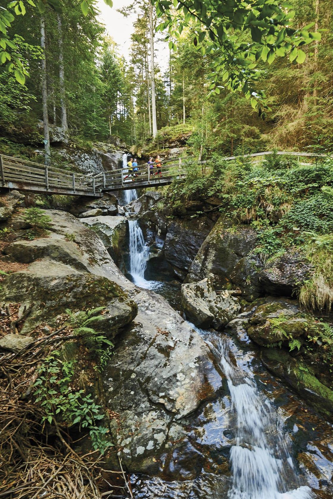 Nationalpark bayerischer wald ausflugsziel wandern for Designhotel bayerischer wald
